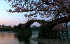 夜明けの五橋と朝桜