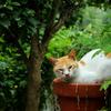 おはよう 鉢猫です(=^・・^=)