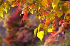 山の秋の色づき