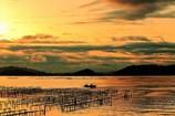 黄金の牡蠣棚で漁をする