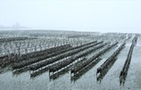 雪降る牡蠣棚