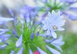 十二単衣の輝き  Unbelievably Flower