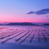 波紋と潮目とサギの牡蠣棚