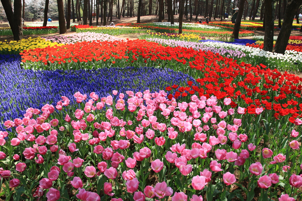春色の絨毯2