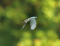 幼鳥飛び出し