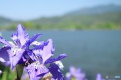 お花とお池