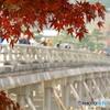 紅葉と渡月橋