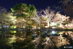 東山花灯路 輝く池