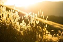 黄金色の草原