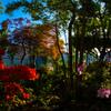 ツツジ咲く風景 #2