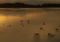 PENTAX PENTAX K-50で撮影した(ある日の夕景)の写真(画像)