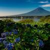 紫陽花と富士