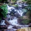 甲山森林公園 仁川渓谷付近 お写んぽ