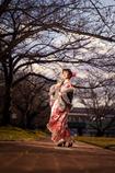 桜はマダかいなぁ
