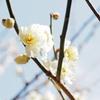 春の光に輝く