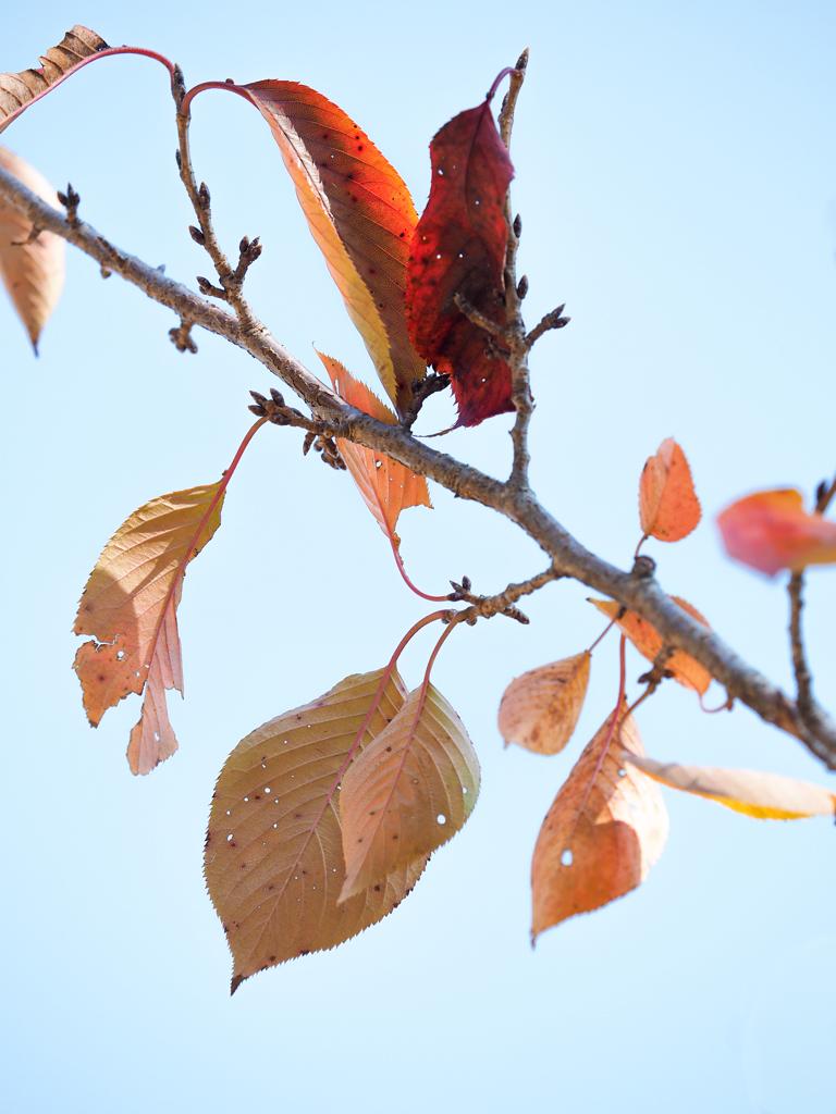 秋も終わりですね〜!