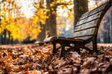 落ち葉の中のベンチ