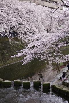 桜より冒険♪