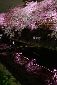 春宵の灯り
