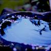 水に浮かぶ桜の花びら*