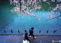 桜2017