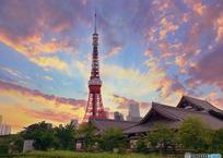 増上寺とタワーの夕景