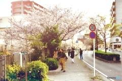 桜吹雪を見送る