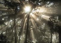 覚醒する原始林