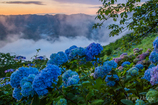 雲上の彩り