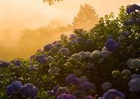 幻想の花園