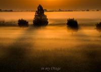 朝靄の饗宴