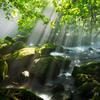 光芒溢れる森