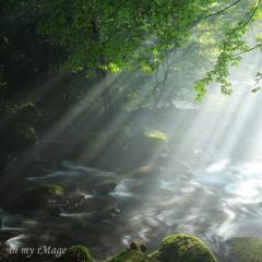 光の森林浴