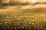 幻影の湿原