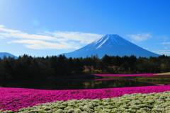 富士山と芝桜-5