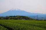 静岡 茶畑と富士山
