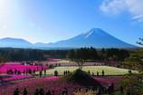富士山と芝桜-1