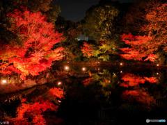 白鳥庭園 名古屋 - 1