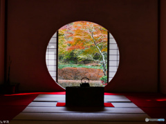 明月院 鎌倉-2