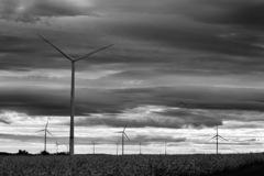 菜の花畑と風車