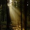 朝の森に降り注ぐ光