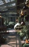 Jack-o'-lantern?