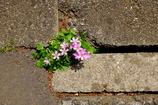 道ばたの花。