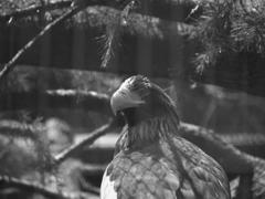ISO50の鳥⑤