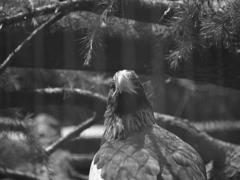 ISO50の鳥④