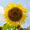 Summer Smile!