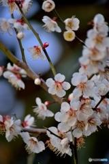 春の香りに包まれ