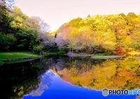 NIKON NIKON D5200で撮影した(春なのに黄金色)の写真(画像)