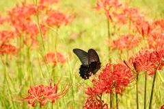 花と咲くのがこの世なら DSC07784