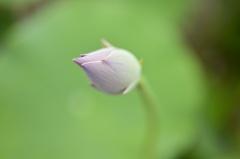 咲く頃にまた会いましょうね